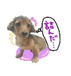 カラフル実写ダックスの子犬(個別スタンプ:30)