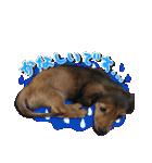 カラフル実写ダックスの子犬(個別スタンプ:31)