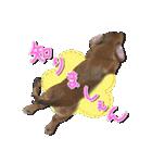 カラフル実写ダックスの子犬(個別スタンプ:32)
