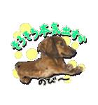 カラフル実写ダックスの子犬(個別スタンプ:33)