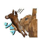 カラフル実写ダックスの子犬(個別スタンプ:34)