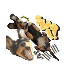 カラフル実写ダックスの子犬(個別スタンプ:35)