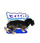 カラフル実写ダックスの子犬(個別スタンプ:36)