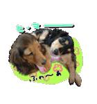 カラフル実写ダックスの子犬(個別スタンプ:37)