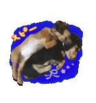 カラフル実写ダックスの子犬(個別スタンプ:38)