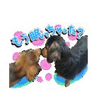 カラフル実写ダックスの子犬(個別スタンプ:39)