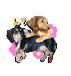 カラフル実写ダックスの子犬(個別スタンプ:40)