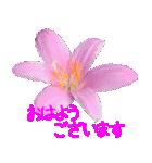 kikimama Flower Sticker(個別スタンプ:01)
