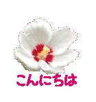kikimama Flower Sticker(個別スタンプ:02)