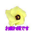 kikimama Flower Sticker(個別スタンプ:04)