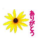 kikimama Flower Sticker(個別スタンプ:05)