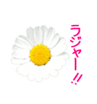 kikimama Flower Sticker(個別スタンプ:06)