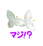 kikimama Flower Sticker(個別スタンプ:08)