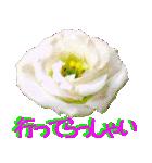 kikimama Flower Sticker(個別スタンプ:12)