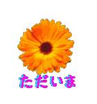 kikimama Flower Sticker(個別スタンプ:13)