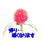 kikimama Flower Sticker(個別スタンプ:20)