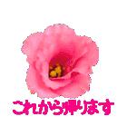 kikimama Flower Sticker(個別スタンプ:21)