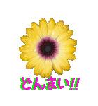 kikimama Flower Sticker(個別スタンプ:24)