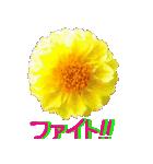 kikimama Flower Sticker(個別スタンプ:25)