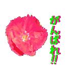 kikimama Flower Sticker(個別スタンプ:26)