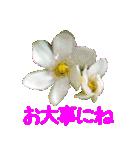 kikimama Flower Sticker(個別スタンプ:28)