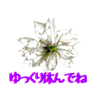 kikimama Flower Sticker(個別スタンプ:29)