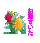 kikimama Flower Sticker(個別スタンプ:30)