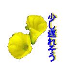 kikimama Flower Sticker(個別スタンプ:34)
