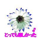kikimama Flower Sticker(個別スタンプ:36)