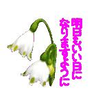 kikimama Flower Sticker(個別スタンプ:37)