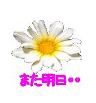kikimama Flower Sticker(個別スタンプ:38)