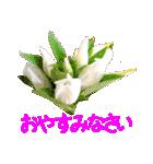 kikimama Flower Sticker(個別スタンプ:39)