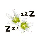 kikimama Flower Sticker(個別スタンプ:40)