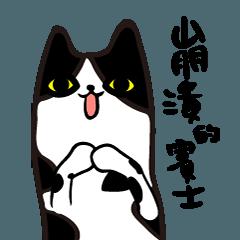 CRAZY TUXEDO CAT