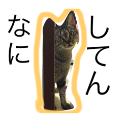 大阪にゃんこ