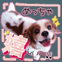 キャバリアのちゃんココvol.3優しい関西弁