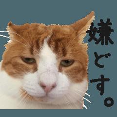 ざ・にゃんこスタンプ4