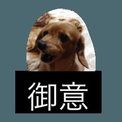 プリンセス犬  (アリエル)
