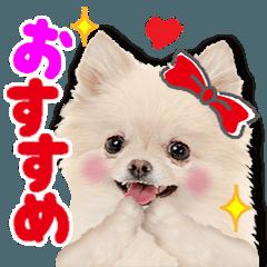 かわいい犬たち♡ガーリー系♡敬語スタンプ