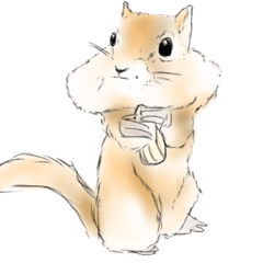 [LINEスタンプ] 大人も使える日常会話(犬,猫,ラッコ,りす)