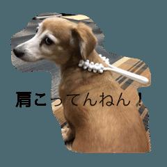 チワックス 小太郎のお茶目日記