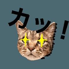 猫田風太郎、あいうえお!(あ〜さ)