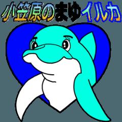 小笠原のまゆイルカ