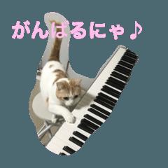 猫ピアニスト