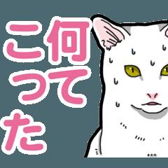 [LINEスタンプ] 白猫びより 2