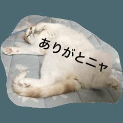 猫腹で感謝を伝えるスタンプ