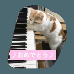 猫まみれな生活
