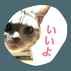 猫のスコさん。3