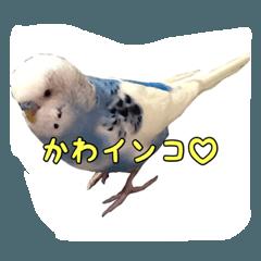 〜インコスタンプ〜