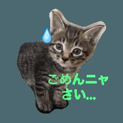 猫田さん家の猫